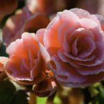 Las flores que dan vida a Géminis