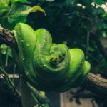 Conoce a la Serpiente en el horóscopo chino